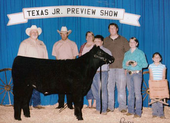 Grand Champion Shorthorn Plus Steer